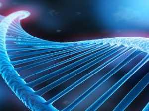 Генетика при беременности